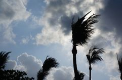 风吹的树 免版税库存照片