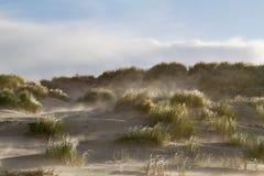 风吹的沙子 免版税库存图片