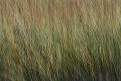 风吹的草 免版税图库摄影
