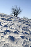 风吹的雪平原 免版税库存图片