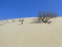 风和沙子的作用对海滩 库存照片