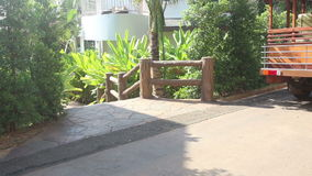 风在台阶附近震动热带植物叶子  股票视频