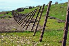 风在怀希基岛,奥克兰的吹的篱芭 库存照片