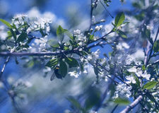风在春天庭院 免版税库存图片