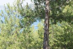 风帆单独,在栗子森林中 免版税库存图片