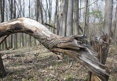 风扭转的树 免版税库存照片