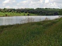 风景、天空、云彩、湖、草和树 免版税库存图片