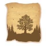 风景、橡树、冷杉和鸟 皇族释放例证