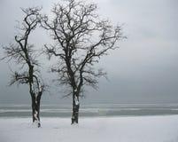 风景。在冻海的岸的两棵偏僻的树 免版税库存图片