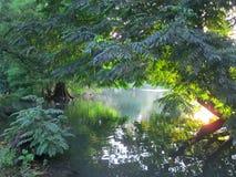 风景。池塘在绿色庭院里。 免版税图库摄影