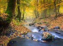 风景不可思议的河在秋天森林里 库存照片