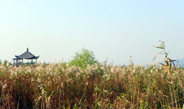 风景中国沼泽地沼泽自然公园 免版税图库摄影