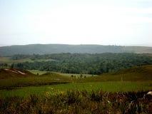 风景公园伟大的大草原亚马逊委内瑞拉 免版税库存图片