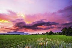 风景农厂米在日落的泰国 图库摄影