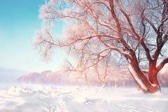 风景冬天背景 斯诺伊冷淡的树在明亮的晴天 在降雪以后的自然场面 在树分支的树冰  库存图片