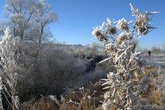 风景冬天,结冰的树 库存照片