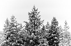 风景冬天 免版税图库摄影