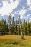 风景加利福尼亚的森林 免版税库存图片