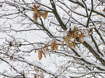 风景包括所有白色雪 库存图片