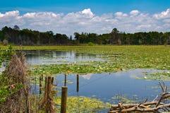 风景包括的湖的百合 库存照片