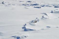 冻风景和冰沙漠 免版税库存图片
