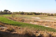 风景和旁遮普邦的绿色领域 图库摄影