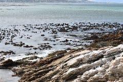 风景和海滩在BettyÂ的海湾与逗人喜爱的公驴企鹅在开普敦,南非附近 库存图片