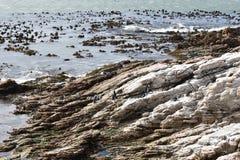 风景和海滩在BettyÂ的海湾与逗人喜爱的公驴企鹅在开普敦,南非附近 免版税库存照片