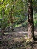 风景和美丽的旅游业足迹在森林 库存图片