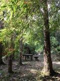 风景和美丽的旅游业足迹在森林 免版税库存照片