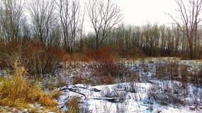 风景哈特福德市印第安纳农村的冬天 免版税库存图片