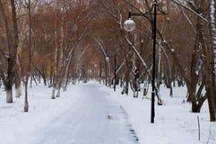风景在与落的雪的秋天是深的,并且不下落的黄色在树离开 免版税库存图片