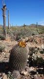 风景在亚利桑那地面蛇沙漠博物馆里面 图库摄影