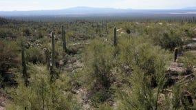 风景在亚利桑那地面蛇沙漠博物馆里面 库存照片
