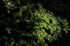 风景在公园 免版税库存照片