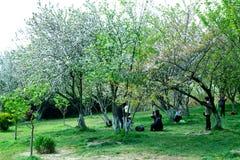 风景在公园 免版税图库摄影