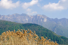 风景在卢加诺,瑞士 库存照片
