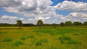 风景在大沼泽地国家公园 免版税库存照片
