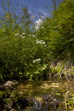风景在小河附近开花 免版税库存照片