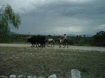 风景在有农夫和动物的墨西哥 免版税库存图片