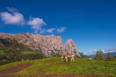 风景在有吃草的母牛阿尔卑斯 库存照片