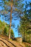 风景在森林 免版税库存照片