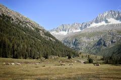 风景在特伦托自治省意大利 库存图片