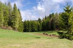 风景在特伦托自治省 库存图片