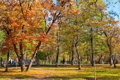 风景在秋天公园 库存照片
