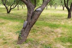 风景在苹果树 库存图片
