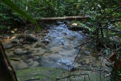 风景在马来西亚 库存图片