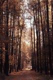 风景在晴朗的森林里 免版税库存图片
