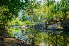 风景在Khao Sok国家公园在泰国 Khao Sok国家公园素叻他尼省的雨密林森林 免版税图库摄影