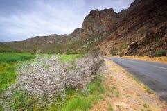 风景在Montagu,南非附近 免版税库存照片